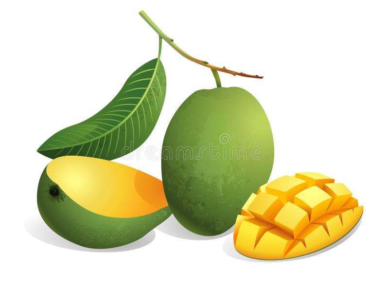 Mango Fruit. Realistic vector illustration of mangoes and a sliced mango stock illustration