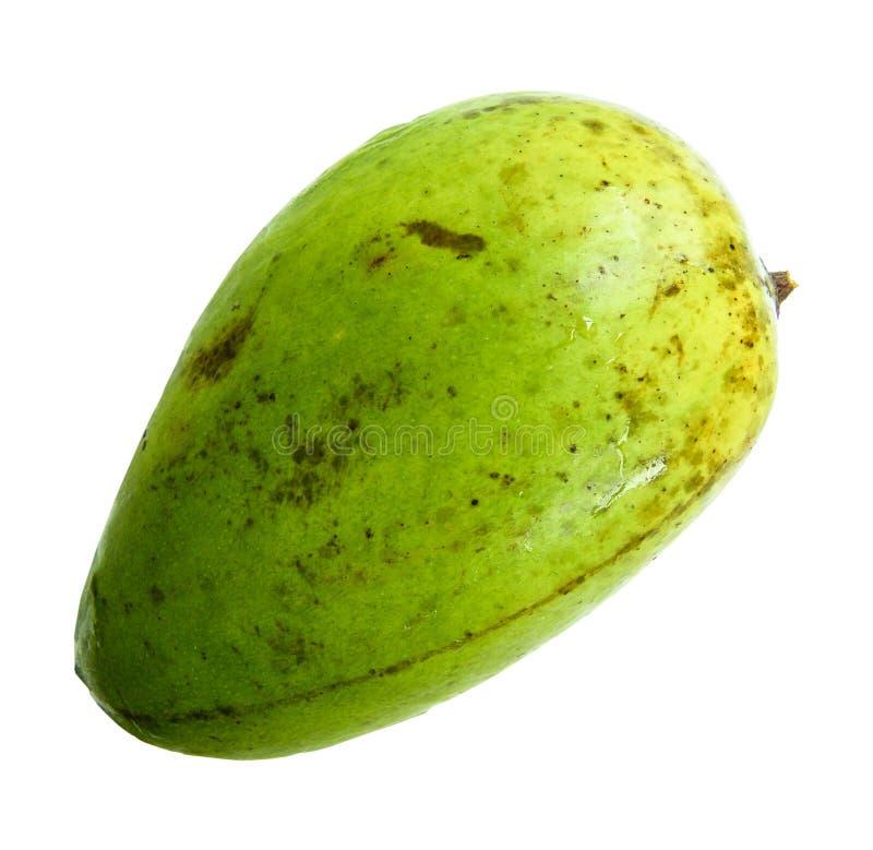 Mango fruit Nontoxic isolated on white background. stock photo