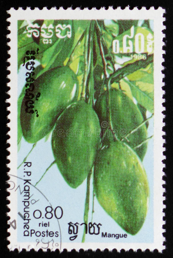 Mango fruit a series of images `Exotic fruits` circa 1986. MOSCOW, RUSSIA - FEBRUARY 19, 2017: A stamp printed in Kampuchea shows Mango fruit a series of images stock photo