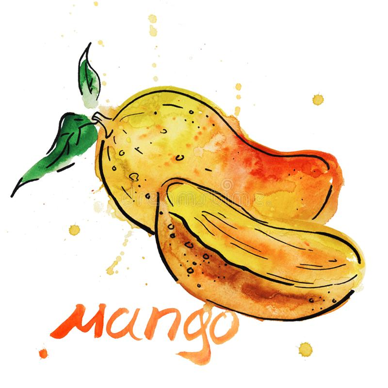 Mango fruit with slices. vector illustration