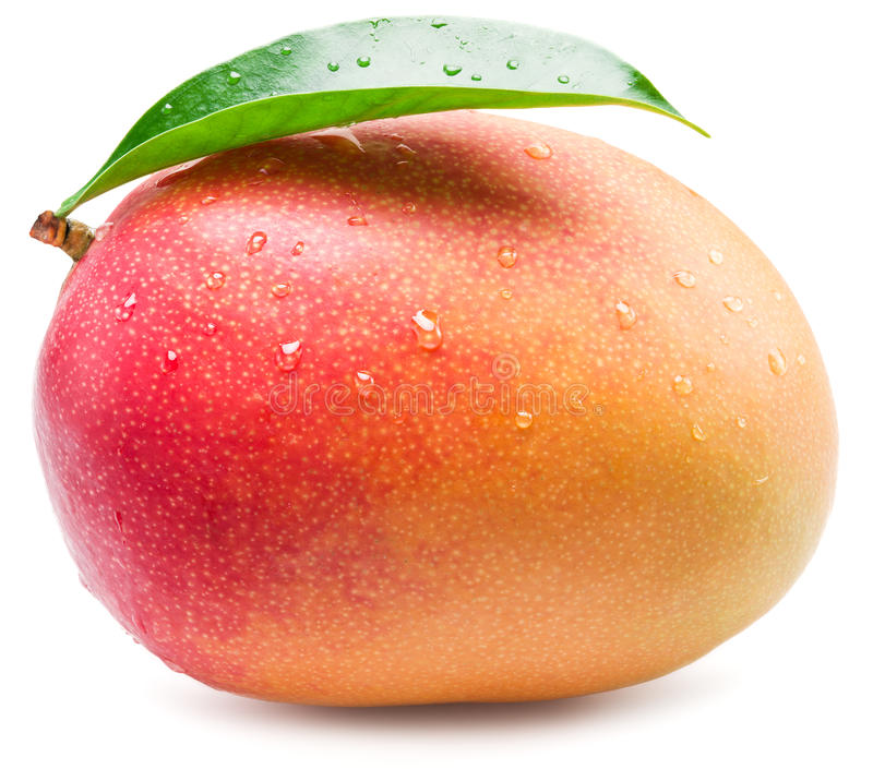 Mango fruit with water drops. Isolated on a white. stock images