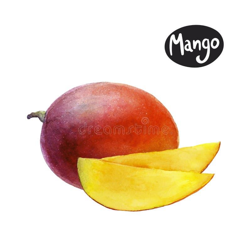 Mango watercolor illustration stock illustration