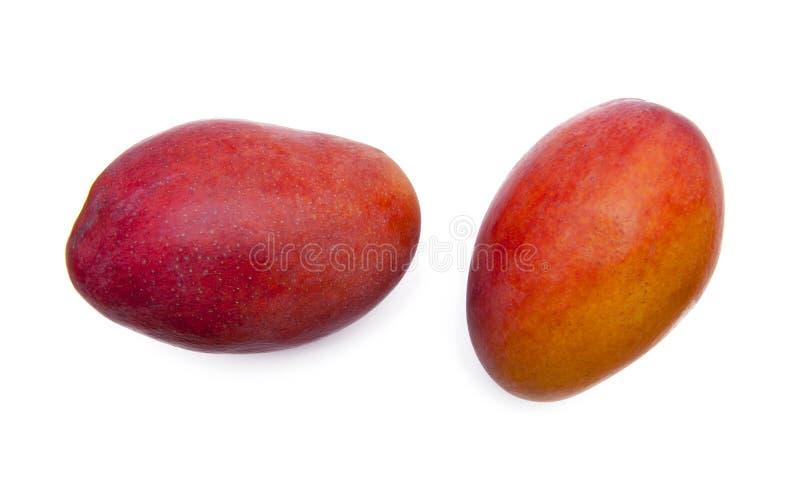 Mango fruits stock image