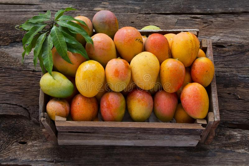 Mango fruits in wooden box with leaf after harvest from farm stock photos