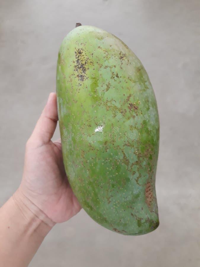Mango, grande frutta, mano della donna nel negozio della frutta immagini stock libere da diritti