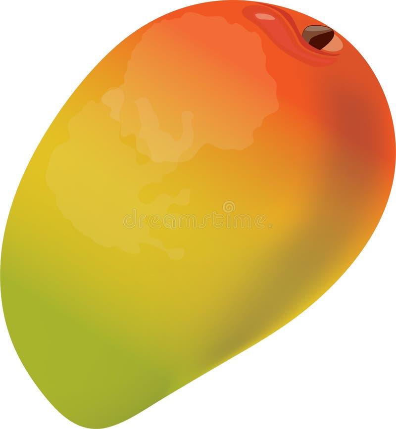 Mango icon stock photos