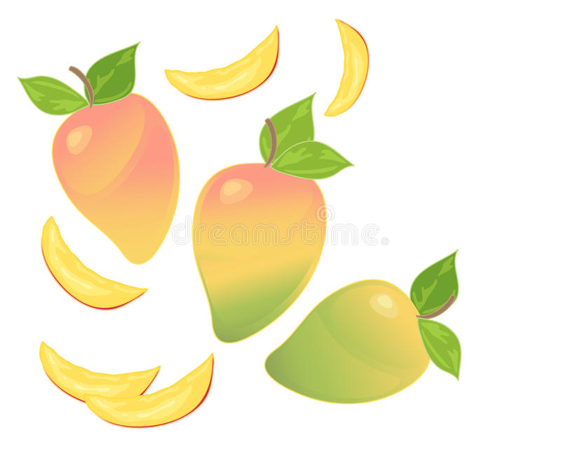 Download Mango stock vector. Illustration of exotic, abstract - 34641788