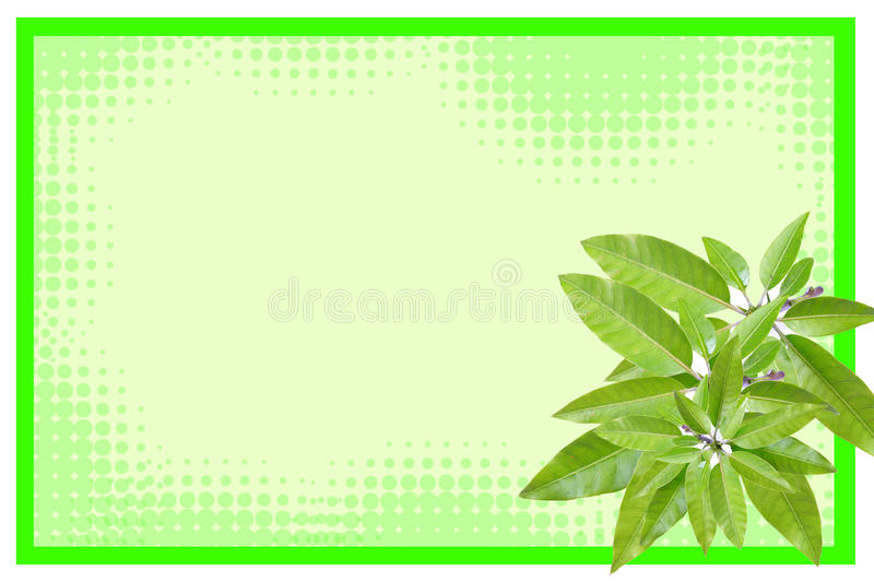 Mango leaves frame. With green background royalty free illustration