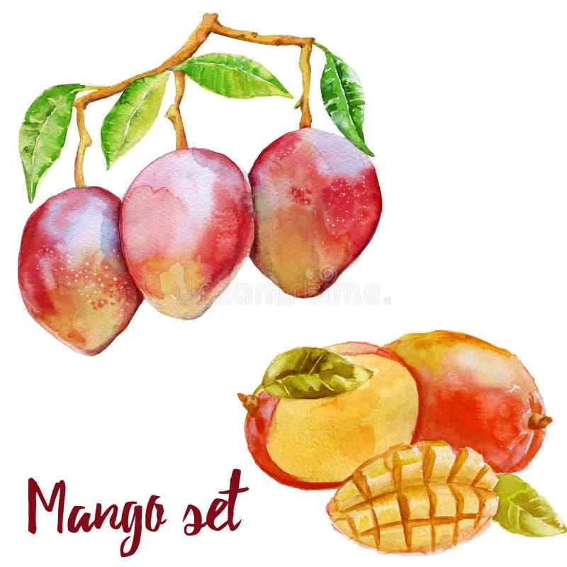 Mango na cięcie owoc w secie i gałąź pojedynczy białe tło ilustracji