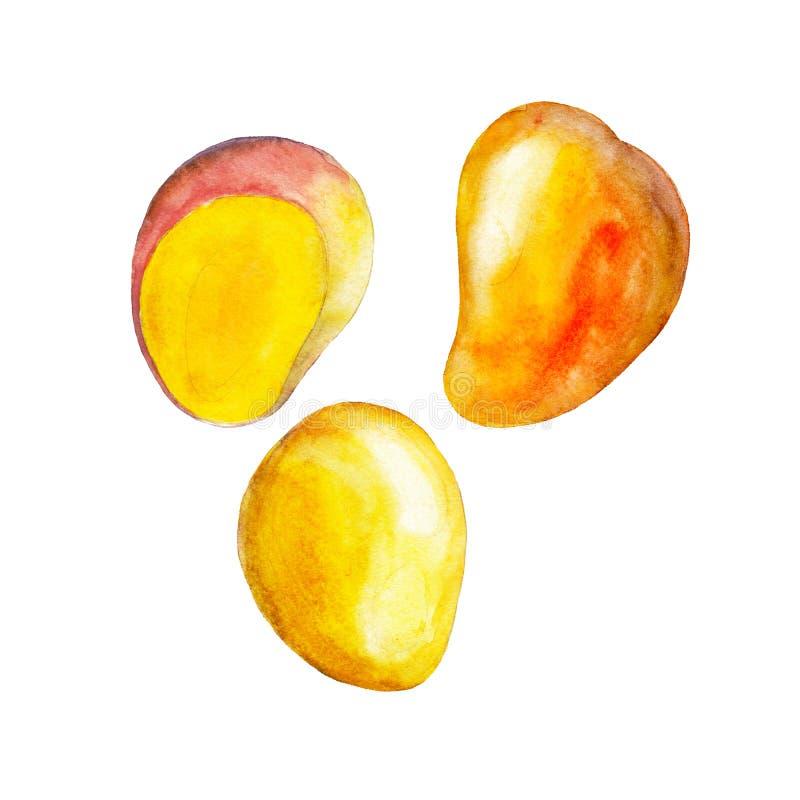 Mango odizolowywający na białym tle, akwareli owoc ilustracyjny set ilustracji