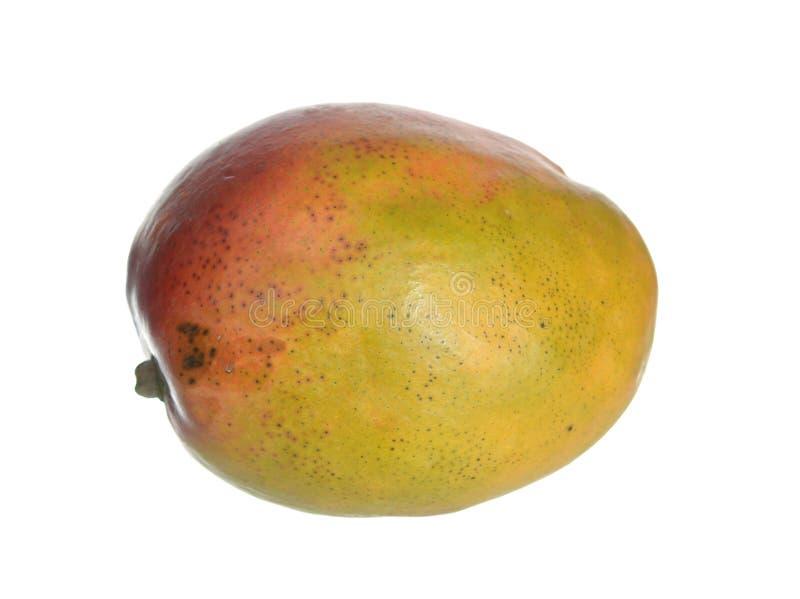 mango organicznie obrazy royalty free
