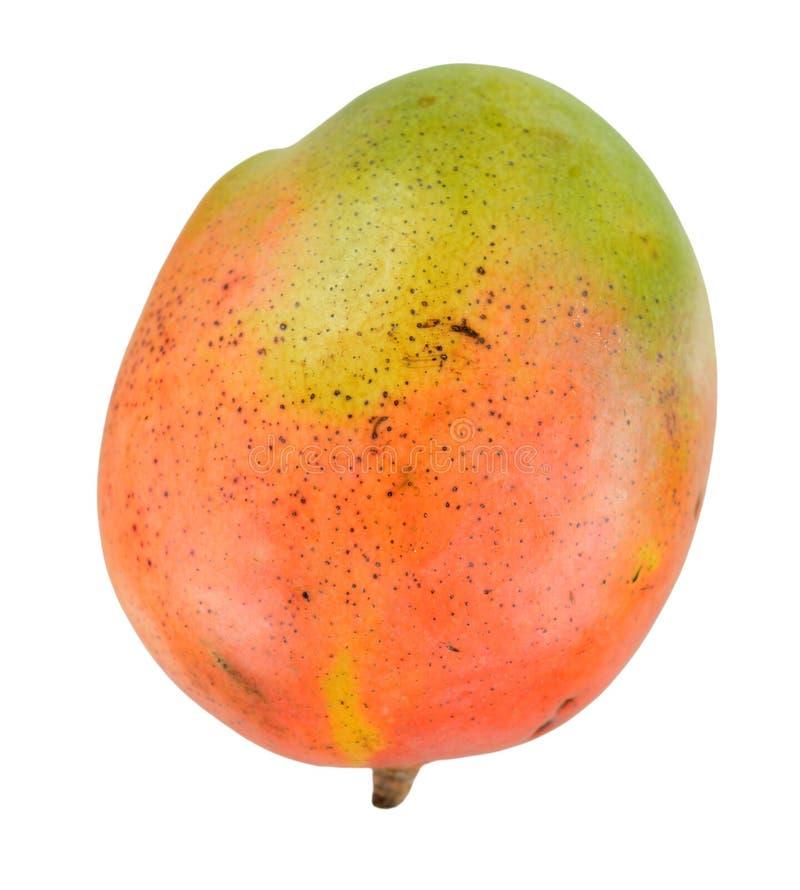 mango pojedynczy zdjęcia stock
