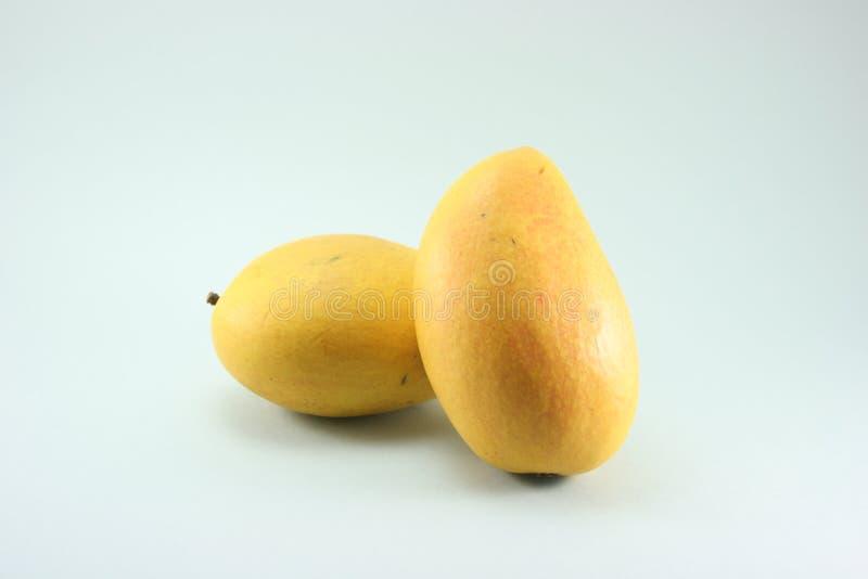 mango propped upp royaltyfri foto