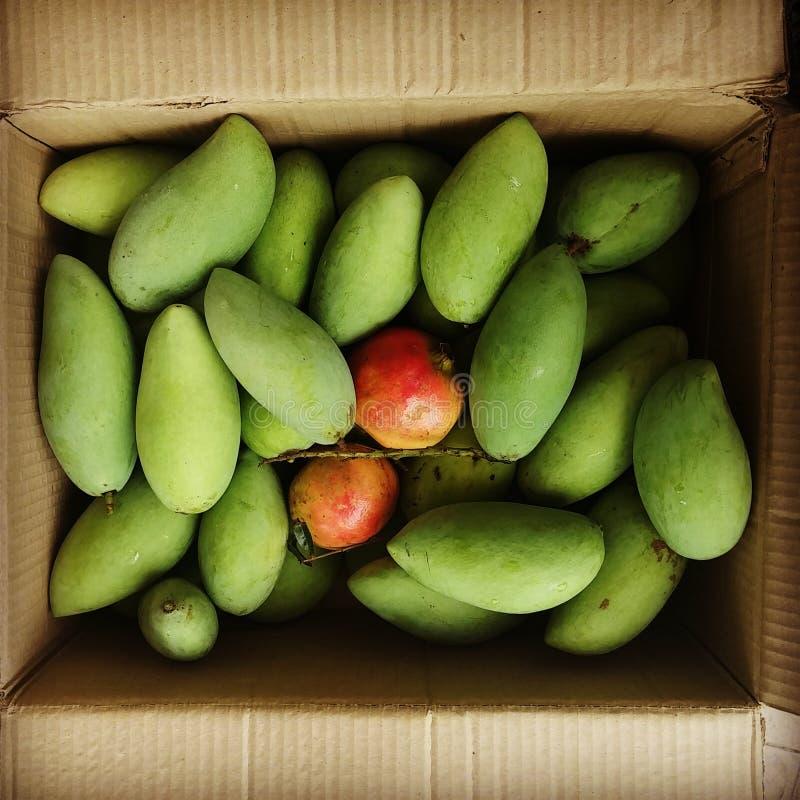 Mango and Punica from My Grandma Garden Bangkok  Thailand royalty free stock images