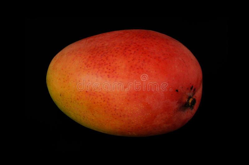 Mango of red color on a black background stock photo