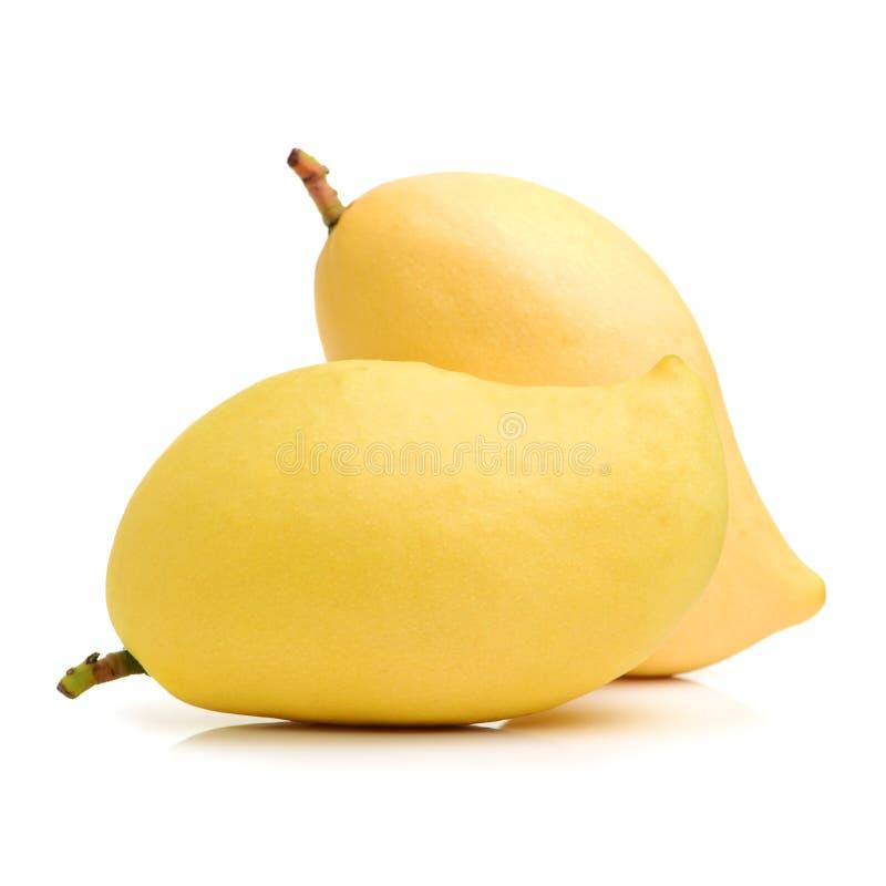Mango rip. On the white Background stock photo