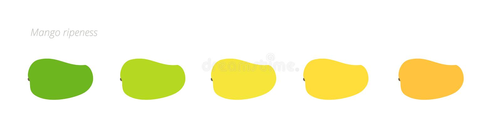 Mango ripeness stages chart. Colour gradation set fruit plant. Ripening plantains. From green to yellow and orange. Animation. Period progression. Flat vector stock illustration