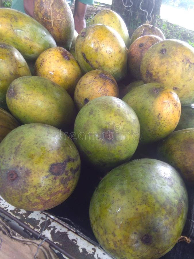Mango& x27;s & x28;karthakolmbam& x29; Traditionele Indiase mango royalty-vrije stock foto