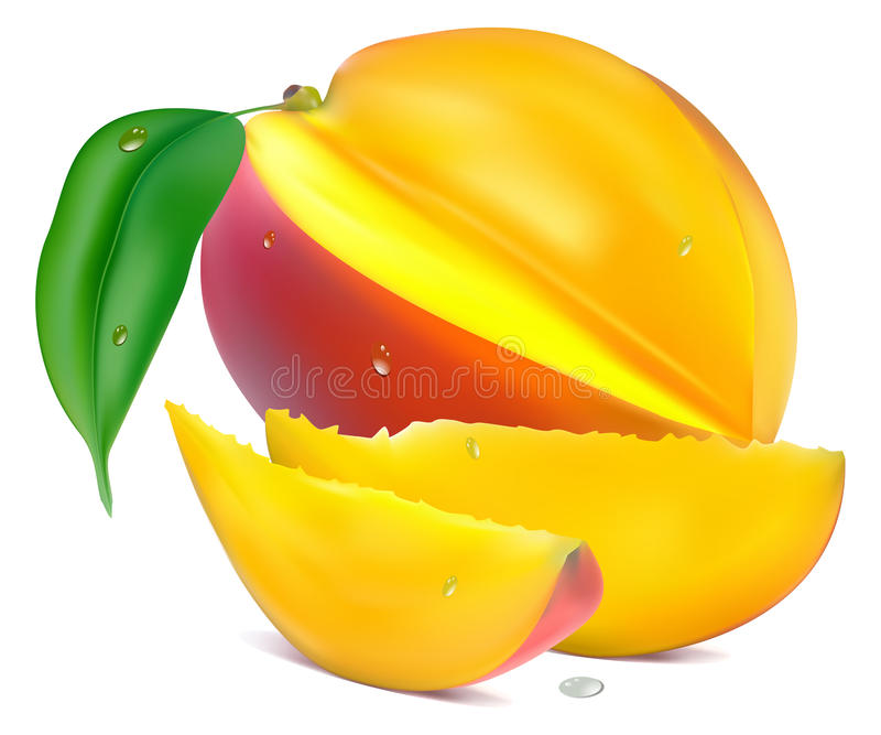 Mango with section royalty free illustration