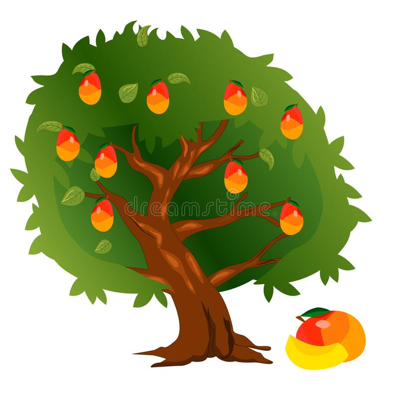 Mango tree with fruits and green leaves.  stock illustration