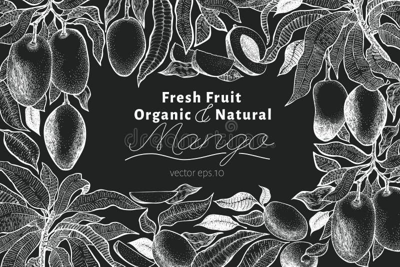 Mango tree vintage design template. Botanical mango fruit frame. Engraved mango. Vector illustration on chalk board royalty free illustration