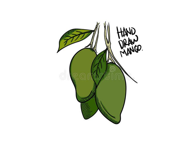 Mango vector. With hand drawn style, simple, easy to edit, layered, file AI, EPS8 vector illustration