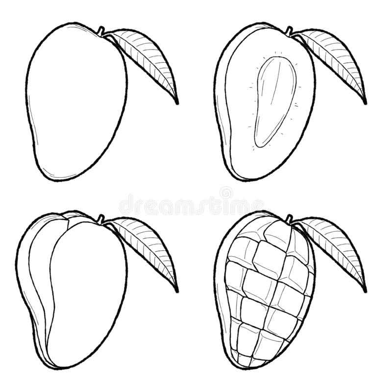 Mango Vector Illustration Hand Drawn Fruit Cartoon Art royalty free illustration