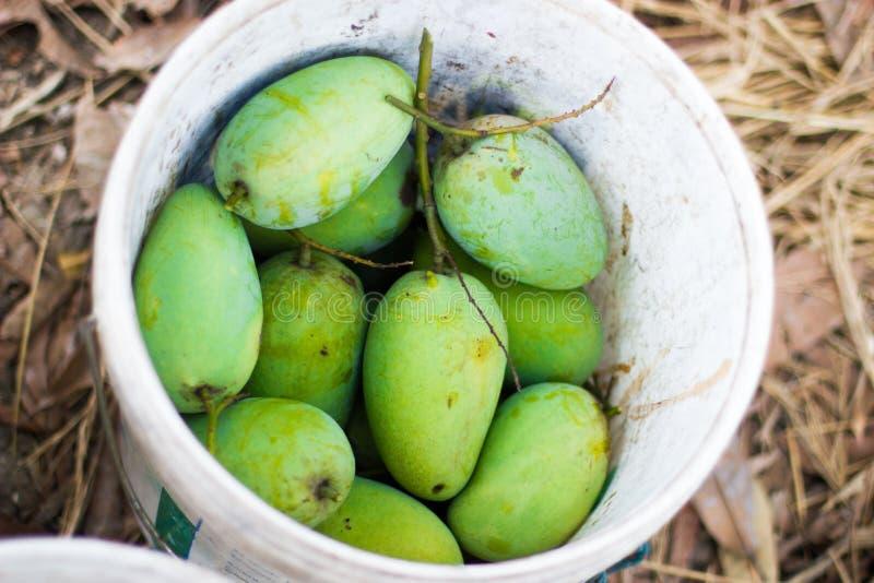 Mango verde fresco en el tanque blanco imagen de archivo