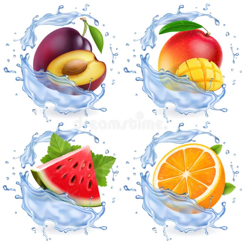 Mango, watermelon, orange, plum in water splash. Fresh fruits realistic vector icon set.  royalty free illustration