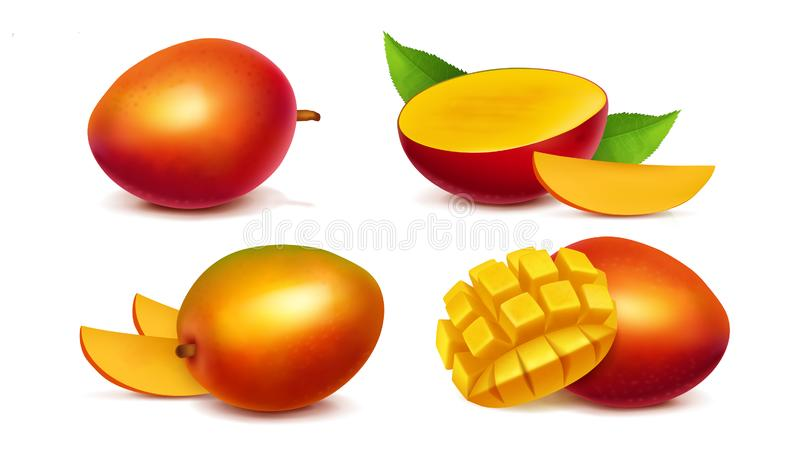 Mango whole and sliced realistic vector stock illustration