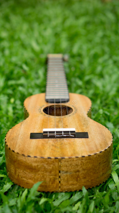 Mango wood ukulele on grass. stock images