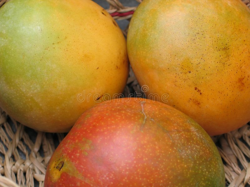 Mangoes-0942 royalty free stock photos