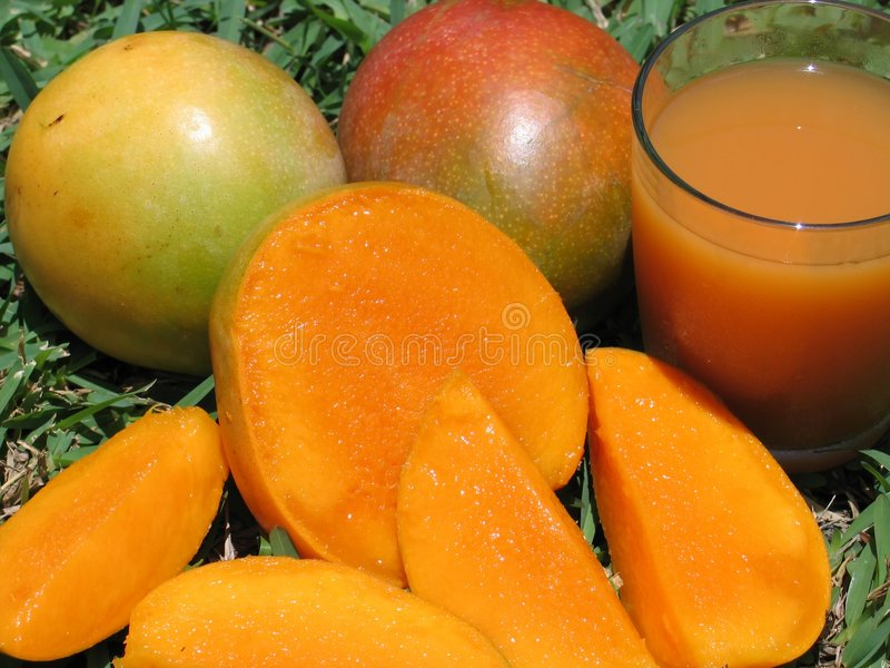 Mangoes-0963 royalty free stock images