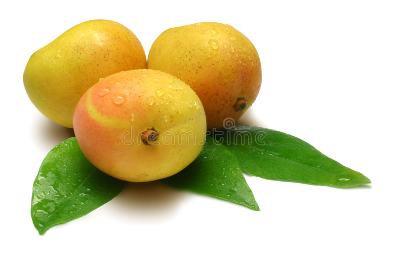 Mangoes. Three Mangoes with leaves, isolated on white