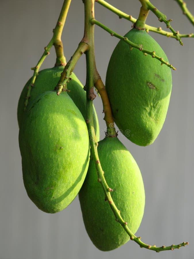 Free Mangoes Royalty Free Stock Images - 16827539