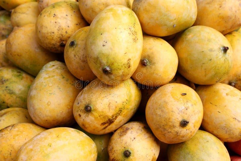 Mangoes royalty free stock photos