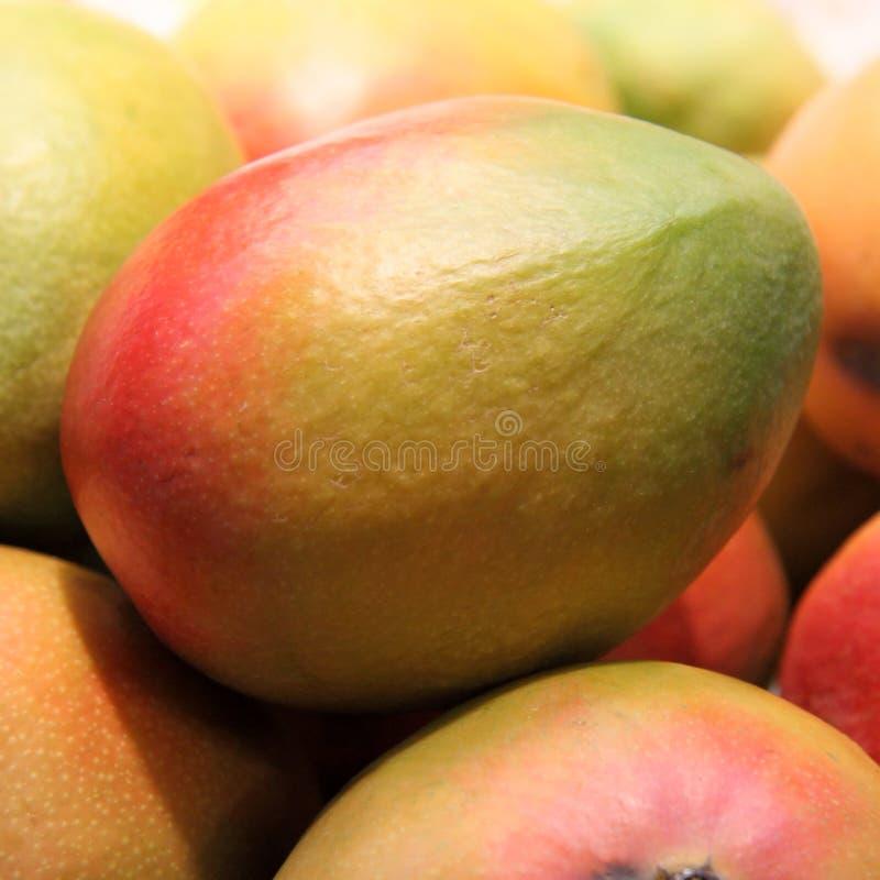 Mangoes stock image