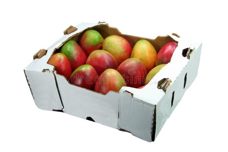 Mangoes royalty free stock photography