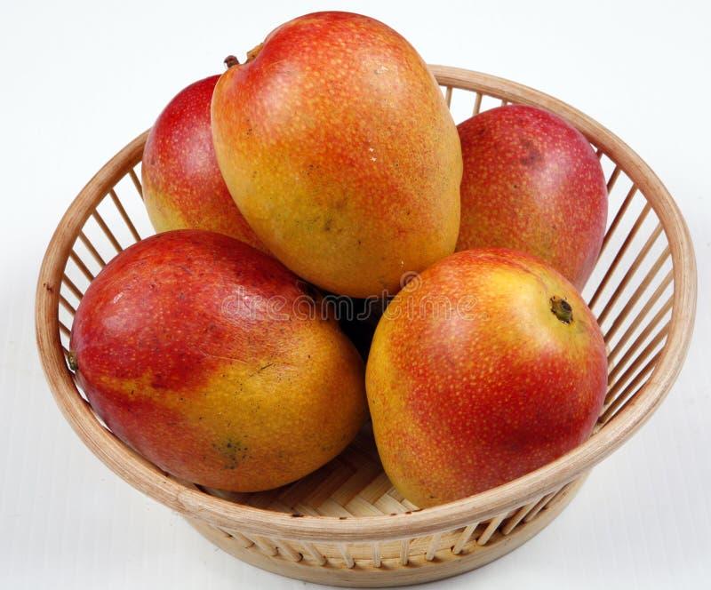 Mangoes royalty free stock photo