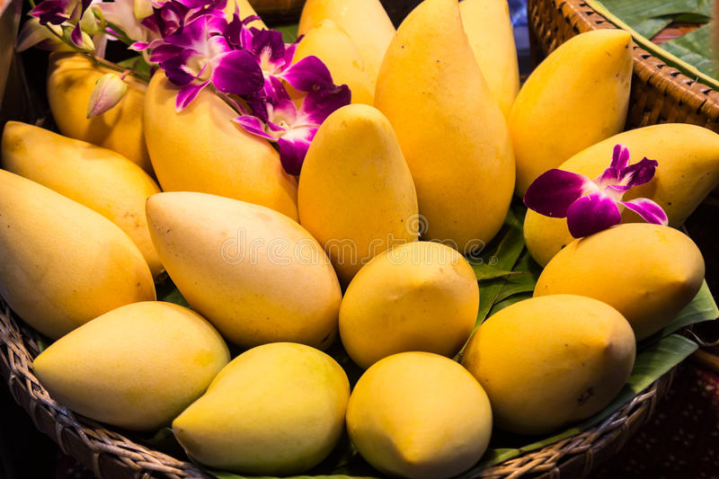 Mangoes in basket. Thai mangoes in basket decorated with orchids at market royalty free stock photos