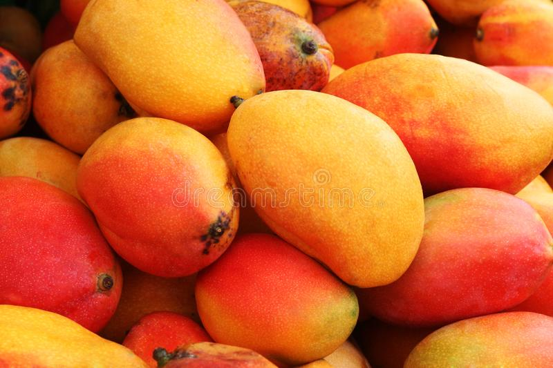 Mangoes basket, tropical fruit that grows on trees stock photos