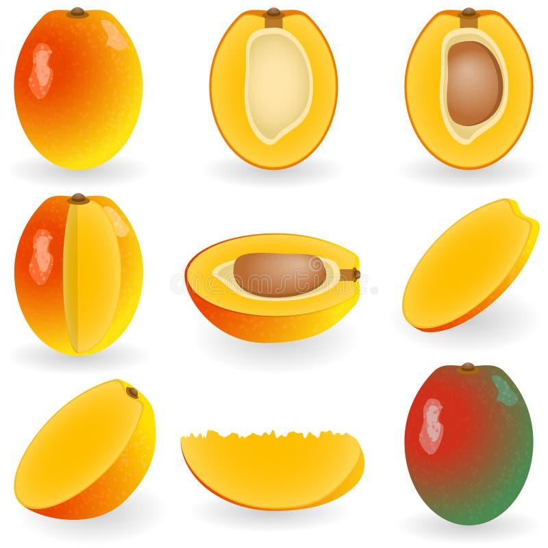 Mangofrucht vektor abbildung