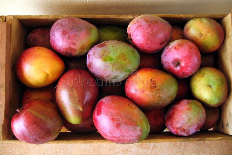 Kasten Mangofrüchte Lizenzfreie Stockfotos