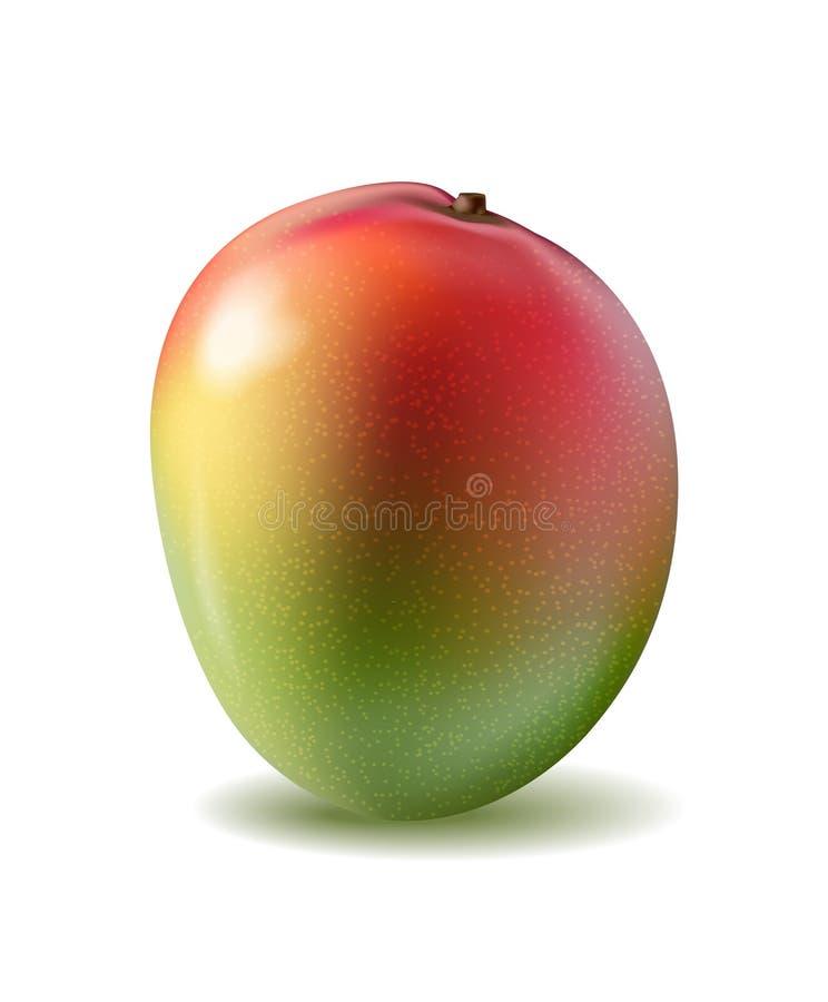 Mangofrucht für frischen Saft realistisches gelbes 3d, rotes, orange ri lizenzfreie abbildung