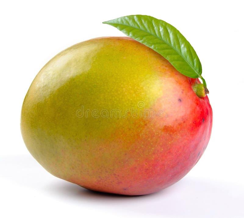 Mangofrucht mit Blättern stockbilder