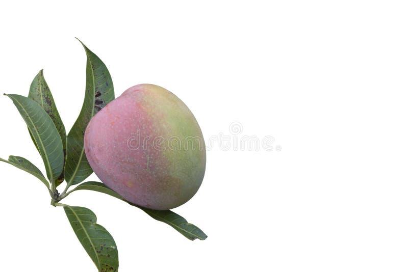 Mangofrucht mit dem Blatt lokalisiert auf weißem Hintergrund lizenzfreies stockfoto
