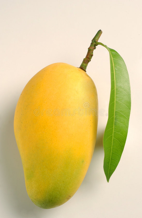 Mangofrucht und Blatt stockbild