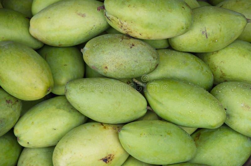 Mangofruit in deel 3 wordt gekweekt die van keerkringen royalty-vrije stock afbeelding