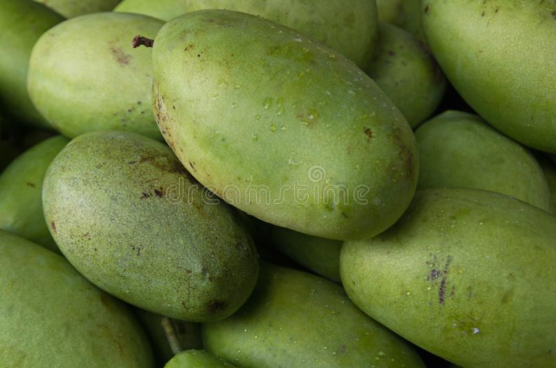 Mangofruit in deel 3 wordt gekweekt die van keerkringen stock foto