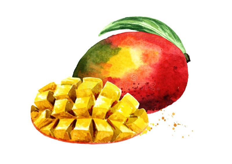 Mangofrukt med mangokuber Dragen illustration för vattenfärg som hand isoleras på vit bakgrund royaltyfri illustrationer